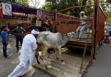 KIBLAT.NET, Jihar – Kekerasan terhadap minoritas Muslim India kembali terjadi. Dua warga Muslim tewas digantung karena memperjualbelikan sapi. Pelaku diduga pengikut ekstremis Hindu yang mensucikan hewan sapi. Menurut surat kabar Hindustan Times, seperti dilansir Reuters Arabic pada Ahad (20/03), dua jasad warga Muslim itu ditemukan di daerah Atihar, provinsi Jihar, Jumat lalu (18/03). Kondisinya mengenaskan, …