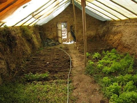 Can't afford a glass greenhouse? Check out how to build your own underground greenhouse for cheaper and for growing veggies 365 days a year, even in cold climates.