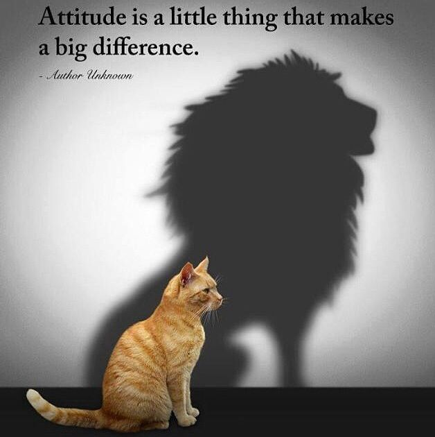 The right attitude will take you far. Be positive and loving to all, not just those who you believe are more deserving of love than others.