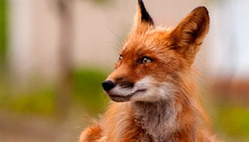 Kenai Chamber of Commerce and Visitors' Center » Wildlife Viewing
