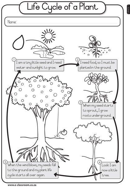 14 best Plants images on Pinterest | Teaching science, Teaching ...