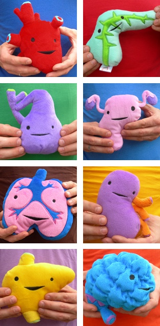 Accurately shaped internal organs, in stuffed animal form.