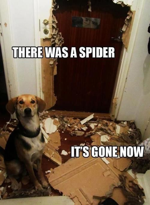 Funny dog @Katie Gillogley Reece
