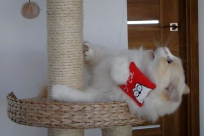 Gioco Lenza con Cordicella e Songalio per Gatti Simon's Cat! <3 #Gioco #Gatto #Gatti #Cat #Kitty #Sonaglio #Cordicella #Lenza #SimonsCat http://www.principini.it/prodotti/gatti/gioco-lenza-per-gatti-simons-cat