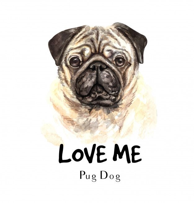 Portrait Pug Dog For Printing Dog Blanket Pugs Dogs