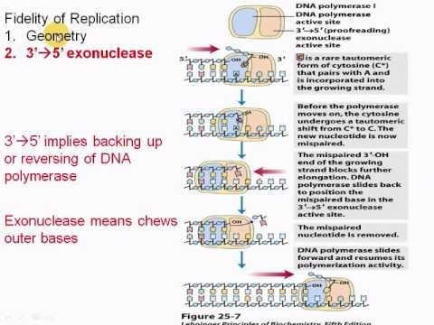 7 best undergrad review images on pinterest adaptive immune find this pin and more on undergrad review by jpieknik publicscrutiny Choice Image