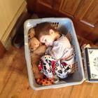 La encantadora pareja: niños, durmiendo en un abrazo con sus perros