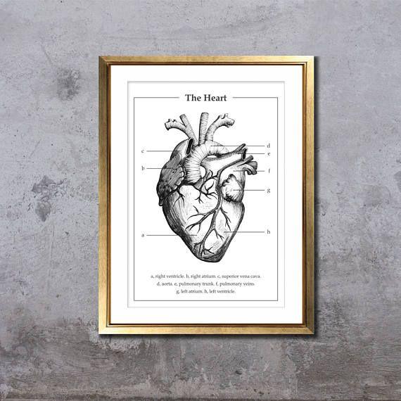 Anatomie van het hart.  Old school anatomische tekening van een menselijk hart. Een perfecte gift voor een afgestudeerde student in de geneeskunde, verjaardagscadeau, of voor het decoreren van uw huis of kantoor. Geïnspireerd door de educatieve afdrukken van de menselijke anatomie en organen.  Deze tekening werd met de hand gemaakt met fineliner, gescand in, digitaal editted en gedrukt. Prints worden gemaakt met een hoge kwaliteit-printer op 200g (mat) papier.  Verkrijgbaar in twee maten…