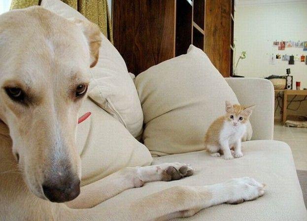 Psy i koty jako