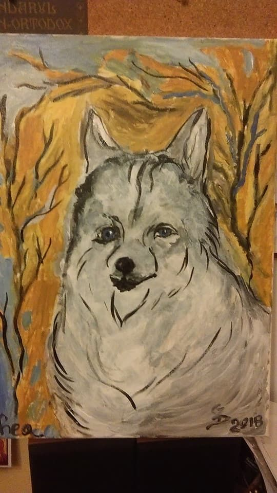 Husky for sale - 200 euro by Gabrielle43