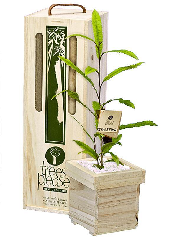 Rewarewa Tree Gift (NZ honeysuckle) Online gifts delivered within NZ