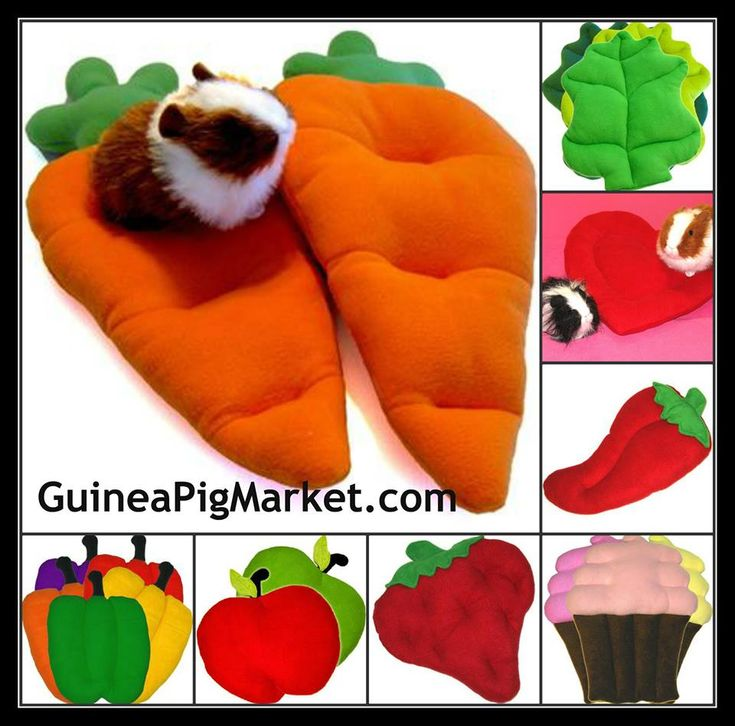 Best 25 Guinea Pig Bedding Ideas On Pinterest Guinea