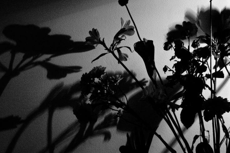 Dark flowers - Shot on a Canon EOS 1000D, Av, ISO 1600, shutter speed 1/25, f/5.6