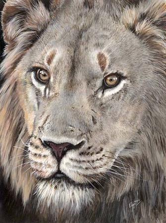 Elize Bezuidenhoud - Lion