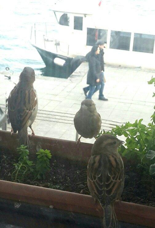 Sariyer - İstanbul