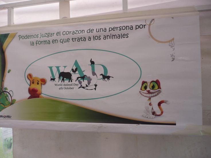 Día de los Animales, Octubre 2013, Tabio