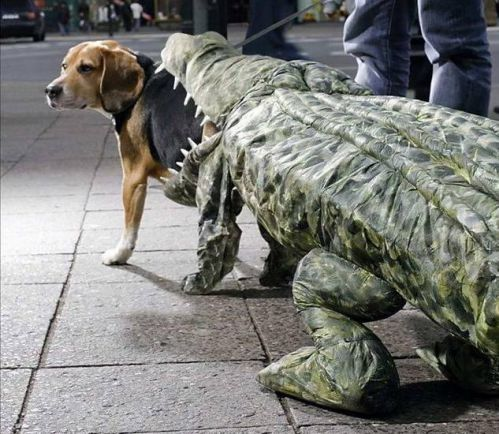 25 unbelievable halloween costumes for dogs - Halloween Costumes For Labradors