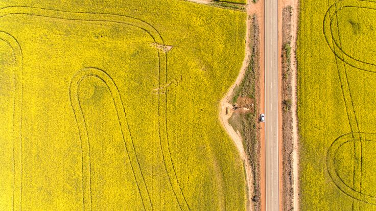 Fields of Gold from above!
