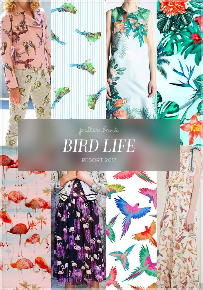 Bird Life Budgie, parrot, flamingo all still featuring on pattern trend reports