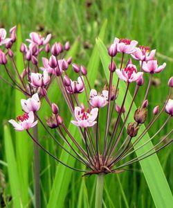 Водные и прибрежные цветы: фото, названия и описание