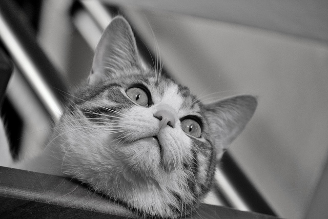 Mishi watching from the stairs by Lidie71, via Flickr