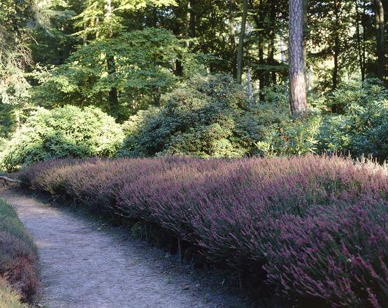"""Auch wenn das Thema """"Bodensäure"""" kompliziert klingt solltest du wissen: Wenn in deinem Garten eine dieser Pflanzen wächst ist der Säuregrad wohl recht hoch."""