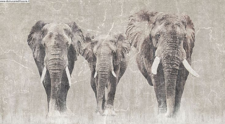 Carta da parati con elefanti
