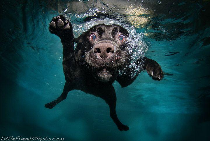My favorite shot of Seth Casteel's Underwater Dog photography