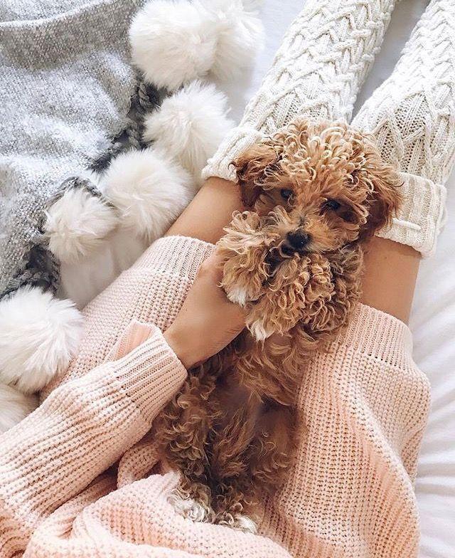 """Kuscheliger geht's nicht! Bei schlechtem Wetter bleibt man gerne den ganzen Tag im Bett und dabei gilt """"je gemütlicher desto besser"""". Mit einer warmen Decke, kuschligen Socken und einem gemütlichen Pullover kann das große Kuscheln starten. Pyjamas / cozy / Strick   Stylefeed"""