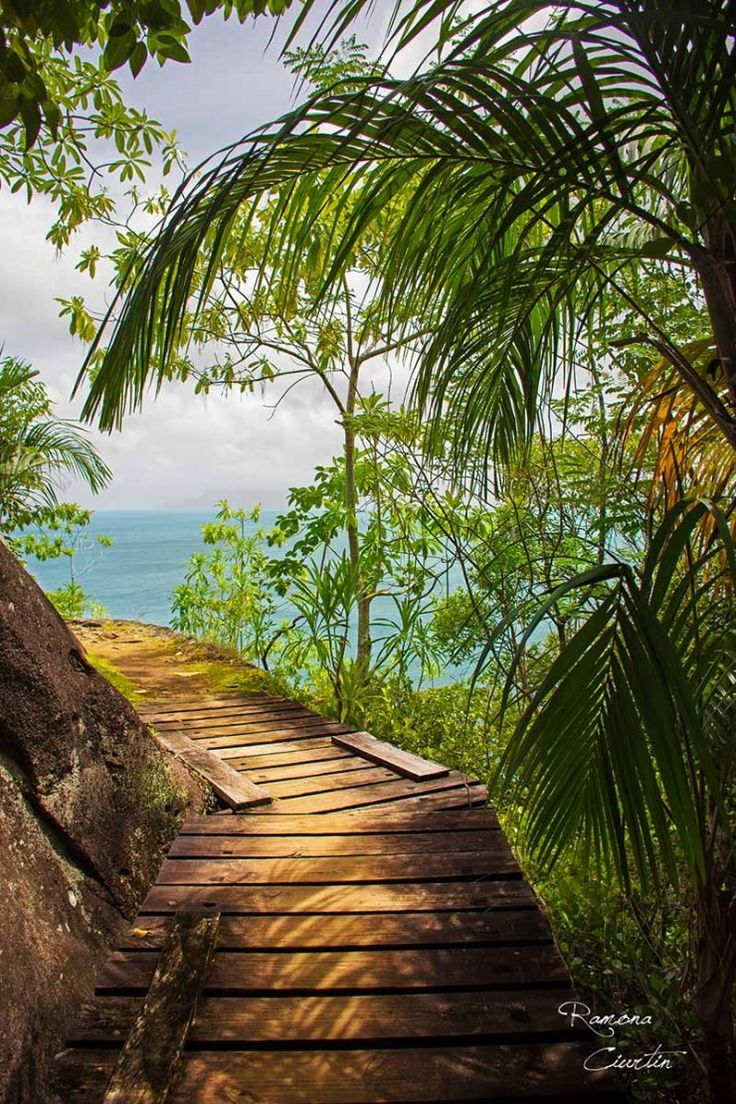 Road to paradise in Seychelles Island. This is the path that leads to Anse Major Beach