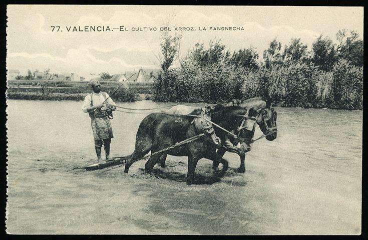 El Cultivo del arroz, la fangnecha : Valencia. (s.a.) - Anónimo