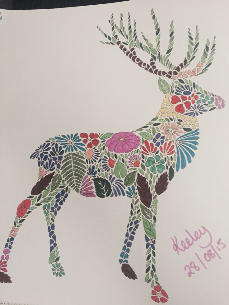 Deer From Millie Marottas Animal Kingdom Colouring Book