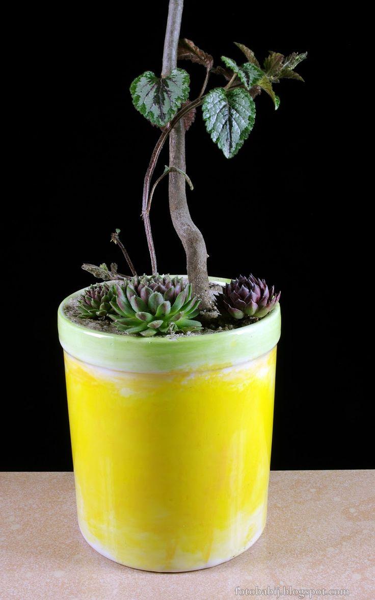 Darmowe zdjęcia na tapety, e-kartki, życzenia... Free Photos : Jasnota plamista Lamium maculatum  jako roślina do...