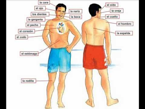 Dolor de cabeza - Barbara MacArthur - learn Spanish body parts