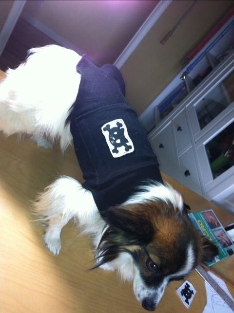 Free dog thunder shirt sewing pattern. Jacket to help pet anxiety.