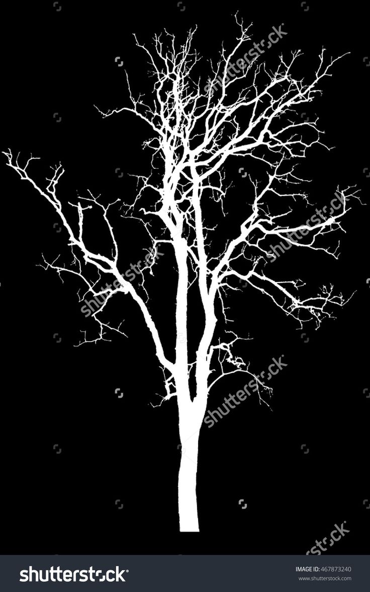 Silhouette Tree Isolated On Black Background With Clipping ...