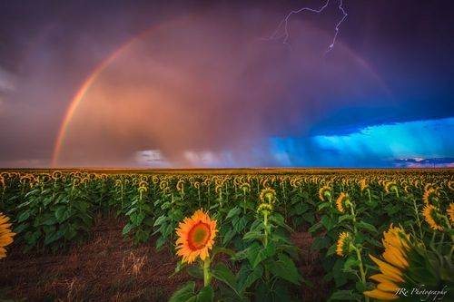 Striking Gold Photo by Jeremy Oliver — National Geographic Your Shot on imgfave