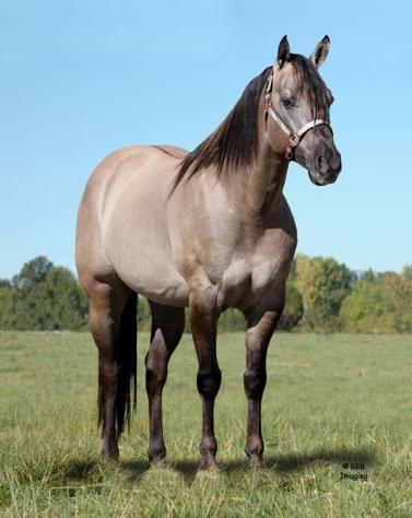 157 best Horse Color Galore: Dun images on Pinterest