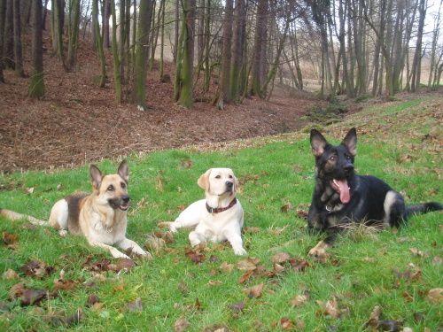 Chcete mit poslušného psa? Výcvik vodicích psů. Opatrovnictví. Poslušnost.
