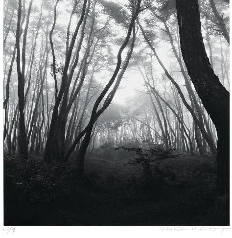 Sacred Wood - BAE, Bien-U - On Landscape via Aando Fine Art Berlin