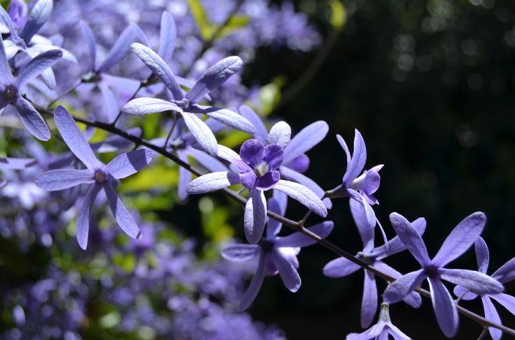 Beautiful detail to each petal #mauve #purple #flower