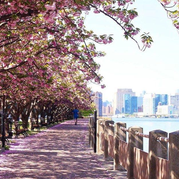 """""""Ihanin New York -löytö: Roosevelt Island. Rauhallinen paikka katsella Manhattanin siluettia. Kaunista erityisesti kirsikankukkien aikaan."""" Kiitos @heidialande! ✨Mikä on sinusta parasta Nykissä? Tägää löytösi #mondolöytö  #newyork #nyc #mondolehti"""