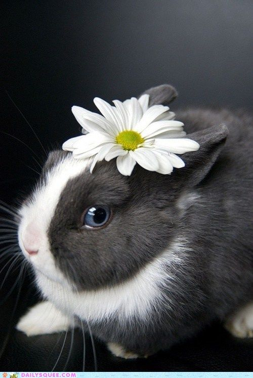 AWW! bunny