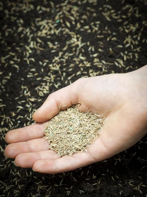 DIYNetwork.com will teach you how to choose the right grass seed to grow the lawn of your dreams.