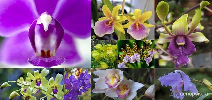 Домашние орхидеи - как ухаживать, как пересадить, размножение и цветение…