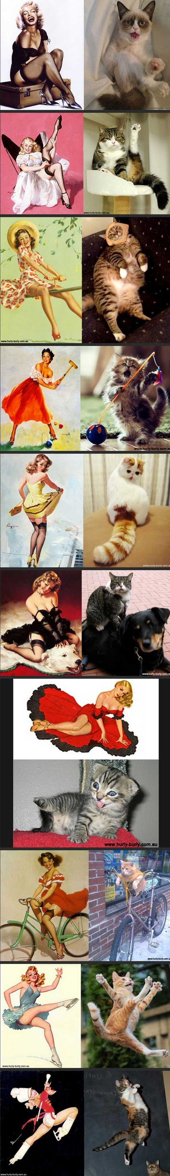 Cats. Who look like pin-ups. haha: