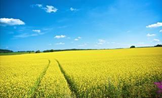 χωράφι, καλλιέργεια, ονειροκρίτης