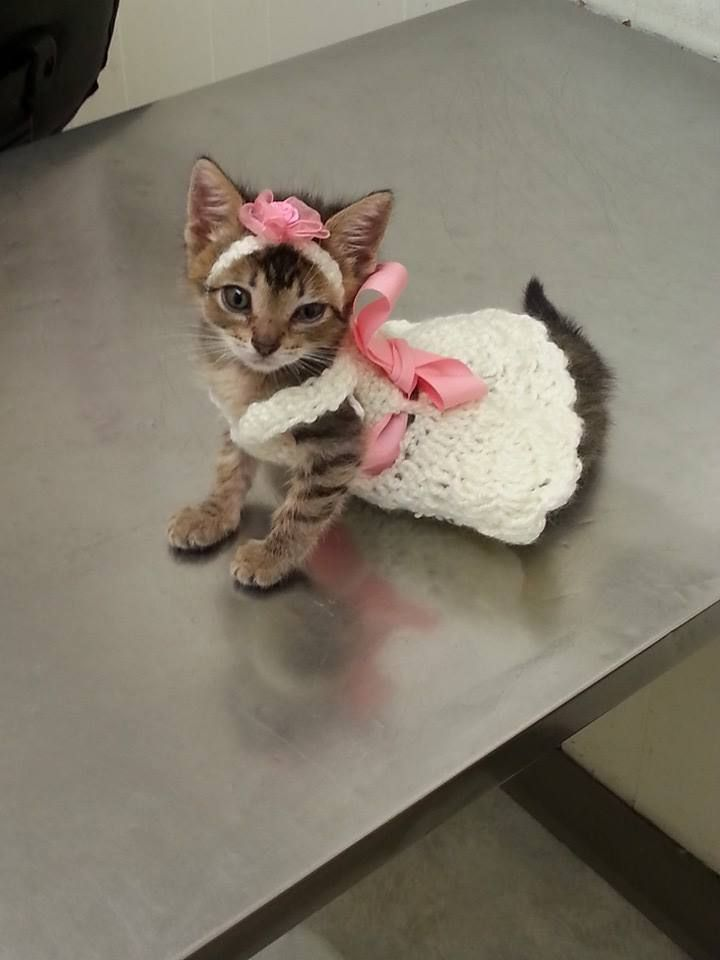 A Kitty Cat That Looks Like A Flower Girl  Cat Costumes -2318