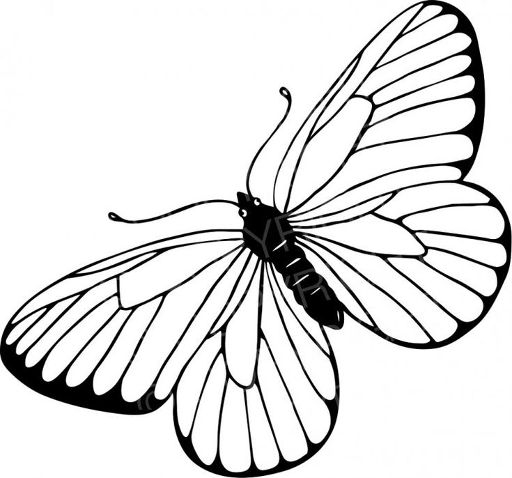 Black & White Line Drawing of a Butterfly Prawny Insect