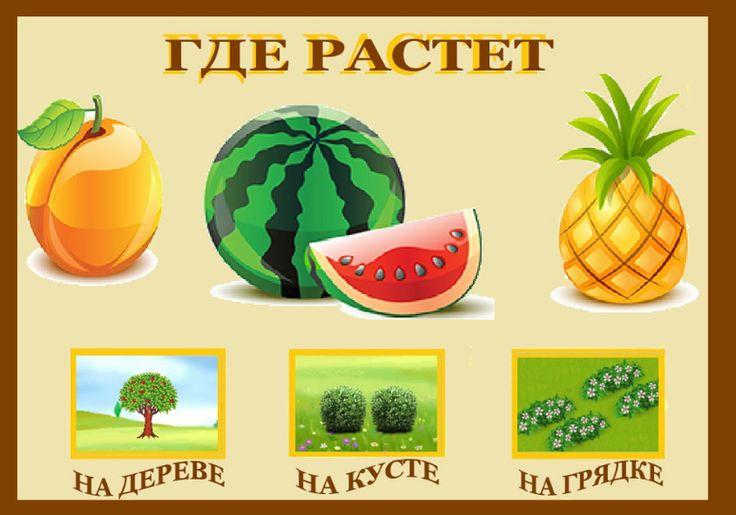 """Дидактическая игра """"Где растут овощи и фрукты"""" - Babyblog.ru"""
